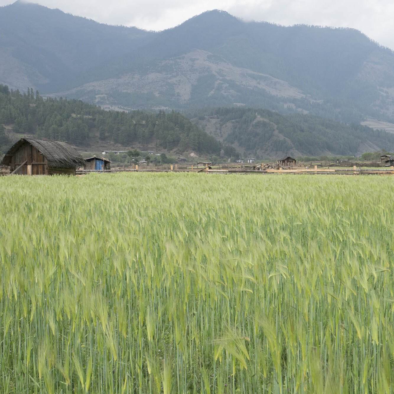 Agricultural fields in rural Bhutan