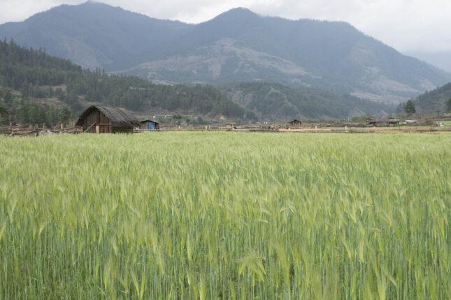 Agricultural fields in rural Bhutan